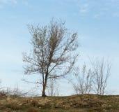 Bloßer Baum in der Natur Stockbild