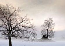 Bloßer Baum in der nebeligen Landschaft Lizenzfreie Stockbilder