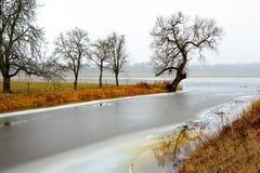 Bloßer Baum in der nebeligen Landschaft Lizenzfreies Stockbild