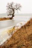 Bloßer Baum in der nebeligen Landschaft Stockbild