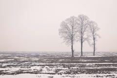 Bloßer Baum Frosts im Winter Lizenzfreie Stockfotografie