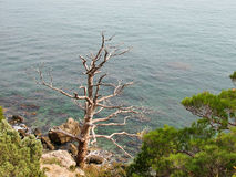 Bloßer Baum gegen das Meer Lizenzfreie Stockfotografie