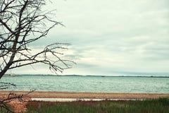 Bloßer Baum gegen den See Stockfotos