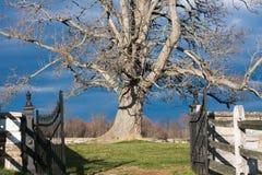 Bloßer Baum gegen stürmischen Himmel Stockfotografie