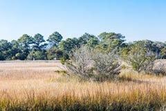 Bloßer Baum im goldenen Sumpf Stockfoto