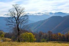 Bloßer Baum im Herbstberg Stockfoto