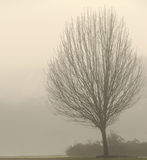 Bloßer Baum im Nebel Stockbilder