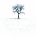 Bloßer Baum im Schnee Lizenzfreie Stockfotos