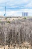 Bloßer Baum im Wald und in der Stadt im kalten Frühling Lizenzfreie Stockbilder