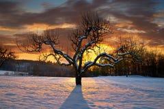 Bloßer Baum im Winter Stockbild