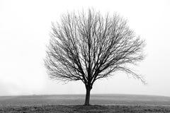 Bloßer Baum im Winter-Nebel Lizenzfreie Stockbilder