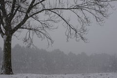 Bloßer Baum inmitten eines Wintersturms Lizenzfreie Stockfotos