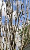 Bloßer Baum mit der Markierungsfahne nach Stockbild