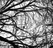 Bloßer Baum mit dunklen Reflexionen auf weißem Hintergrund Lizenzfreies Stockbild