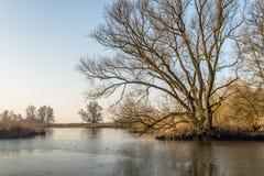 Bloßer Baum mit unregelmäßigen Niederlassungen am Rand des Wassers Lizenzfreies Stockfoto