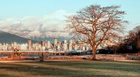 Bloßer Baum mit Vancouver-Skylinen Lizenzfreie Stockfotos