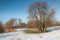Bloßer Baum mit vielen Kabeln im Winter Lizenzfreie Stockfotografie