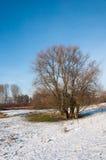 Bloßer Baum mit vielen Kabeln im Winter Stockbild