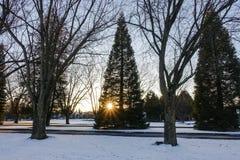 Bloßer Baum mit Vogelnest stockfoto