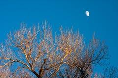 Bloßer Baum am Nachmittag Sun und am Moonrise Stockfotos