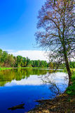Bloßer Baum nahe dem See umgeben durch bunte Bäume Lizenzfreies Stockbild