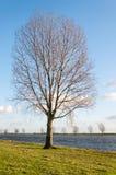 Bloßer Baum neben einem Fluss Lizenzfreie Stockfotos