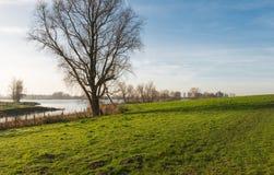 Bloßer Baum neben einem niederländischen Fluss Lizenzfreies Stockbild