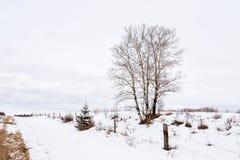 Bloßer Baum neben einem Zaun in der Winterlandschaft Lizenzfreies Stockfoto