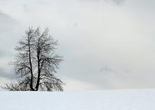 Bloßer Baum ohne Mittelfeldblatt des Schnees Lizenzfreie Stockbilder
