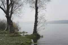 Bloßer Baum am Rand des Teichs Lizenzfreies Stockfoto