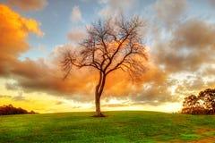 Bloßer Baum am Sonnenuntergang Lizenzfreies Stockbild