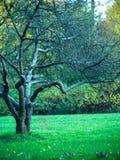 Bloßer Baum steht in einer Reinigung  Lizenzfreies Stockfoto
