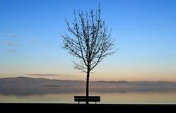 Bloßer Baum und Bank auf dem Ufer von einem See stockfoto