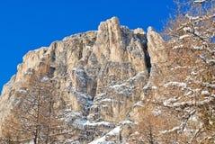 Bloßer Baum und Felsen im Dolomitberg Stockbild
