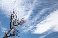 Bloßer Baum und Niederlassungen Stockfoto