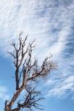 Bloßer Baum und Niederlassungen Stockbild