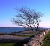 Bloßer Baum und stonewall durch das Meer. Lizenzfreie Stockfotos