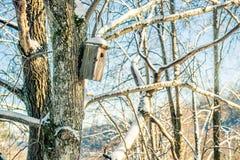 Bloßer Baum- und Vogelkasten am Winter Lizenzfreie Stockfotografie