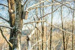 Bloßer Baum- und Vogelkasten am Winter Lizenzfreies Stockfoto