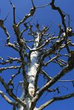 Bloßer Baum unter dem Himmel Stockfoto