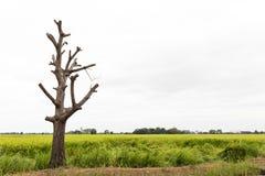 Bloßer Baumastschnitt Stockfotografie