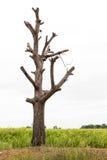 Bloßer Baumastschnitt Lizenzfreie Stockfotos