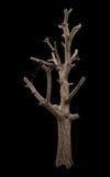 Bloßer Baumastschnitt des Isolats Stockfotografie
