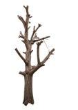 Bloßer Baumastschnitt des Isolats Stockfotos