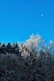 Bloßer Birkenbaum mit Raureiffrost Lizenzfreie Stockbilder