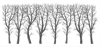 Bloßer Busch des Winters ohne Blätter stock abbildung