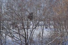 Bloßer Busch im Winter Hintergrund, Beschaffenheit Lizenzfreies Stockbild