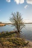 Bloßer Busch am Rand des Wassers Lizenzfreies Stockfoto