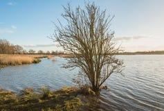 Bloßer Busch am Rand des Wassers Stockfotografie