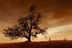 Bloßer Eichen-Baum am Sonnenuntergang Lizenzfreie Stockfotos